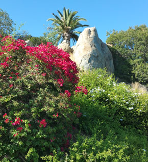 Massive Rock Outcropping with Palm Tree and Bushes